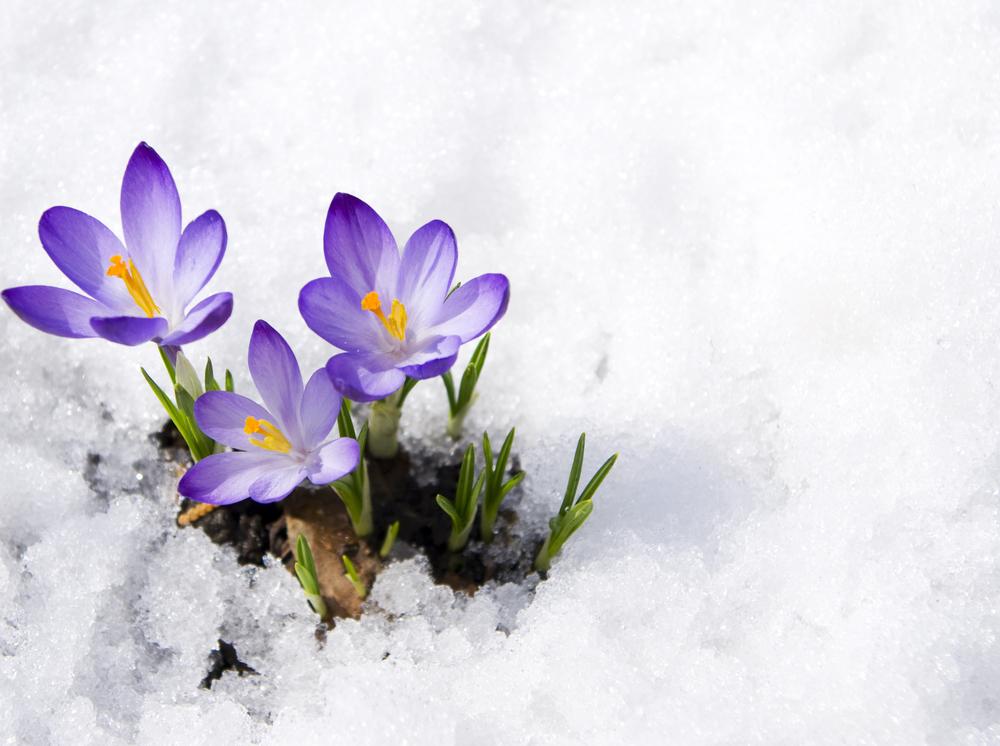 wildflowers in snow